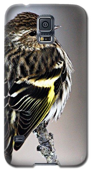 Pine Siskin Galaxy S5 Case by Larry Ricker