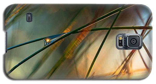 Pine Needle Sunset Galaxy S5 Case