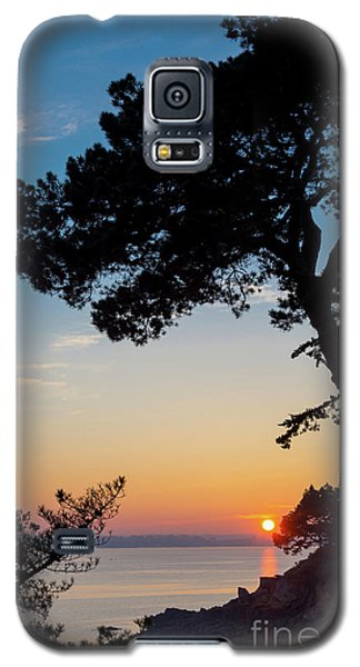 Galaxy S5 Case featuring the photograph Pine Tree by Delphimages Photo Creations