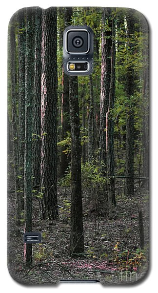 Galaxy S5 Case featuring the photograph Pine Wood Sunrise by Skip Willits
