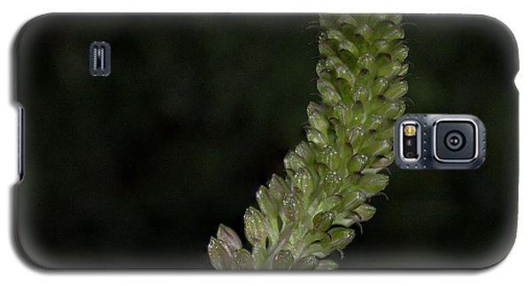 Pineapple Lily Galaxy S5 Case