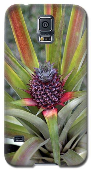 Pineapple, Oahu Galaxy S5 Case