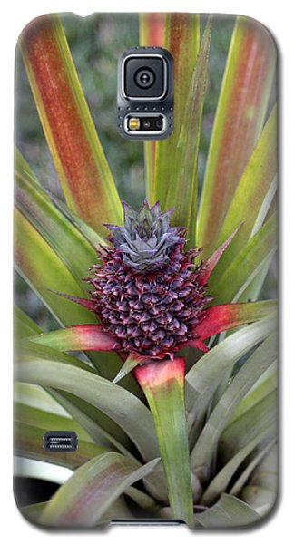 Pineapple, Oahu Galaxy S5 Case