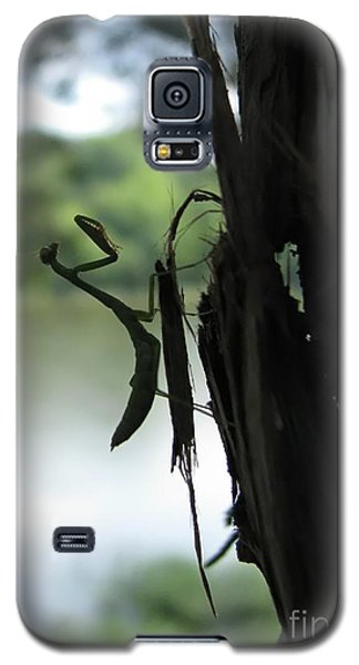 Galaxy S5 Case featuring the photograph Pines And Prayers by Misha Bean