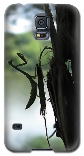 Pines And Prayers Galaxy S5 Case