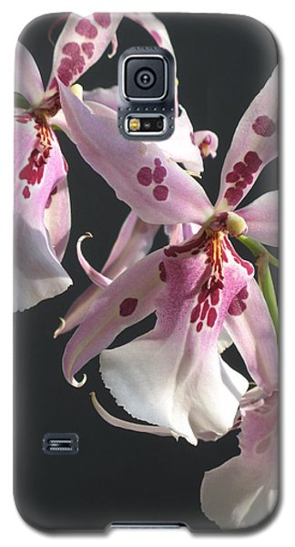 Pink And White Orchid Galaxy S5 Case
