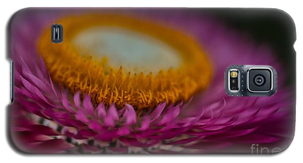 Pink And Yellow Strawflower Close-up Galaxy S5 Case
