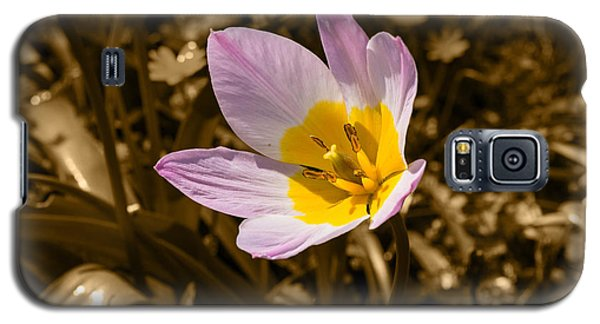 Pink And Yellow Tulip On Sepia Background Galaxy S5 Case