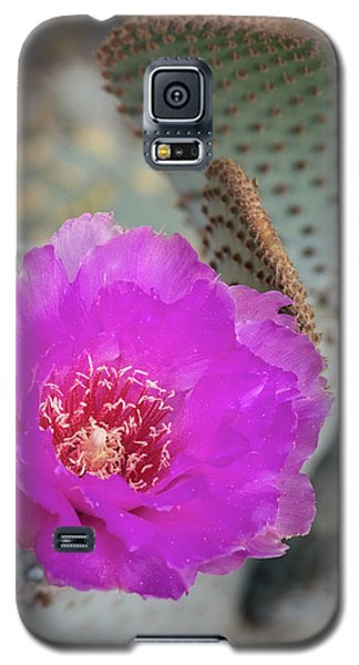 Galaxy S5 Case featuring the photograph Pink Beavertail Cactus  by Saija Lehtonen