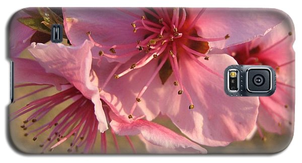 Galaxy S5 Case featuring the photograph Pink Blossoms by Barbara Yearty