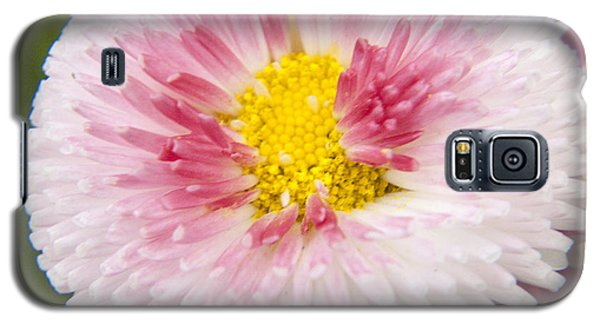 Pink Button Flower Galaxy S5 Case by Darleen Stry