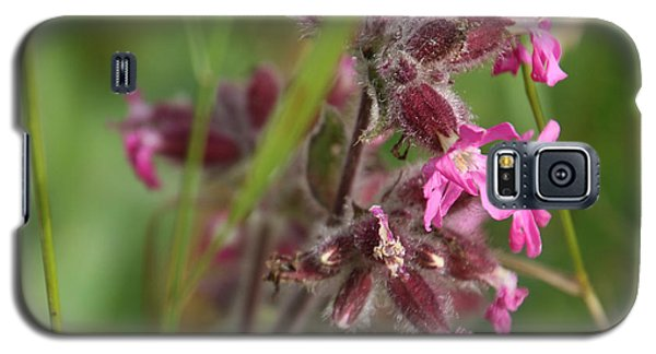 Pink Campion In August Galaxy S5 Case