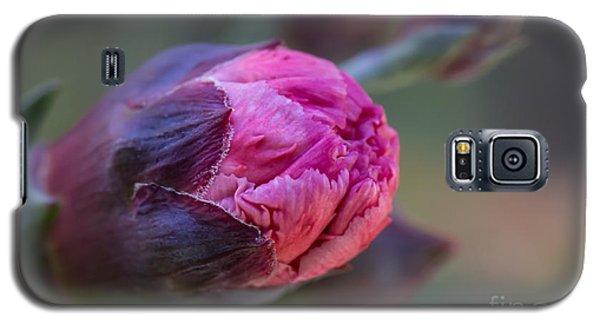 Pink Carnation Bud Close-up Galaxy S5 Case