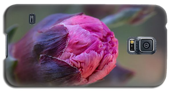 Pink Carnation Bud Close-up Galaxy S5 Case