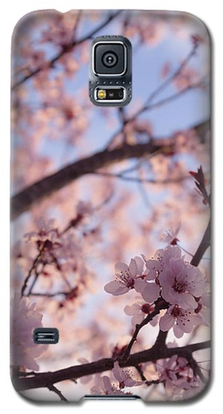 Pink Cherry Blossoms Galaxy S5 Case