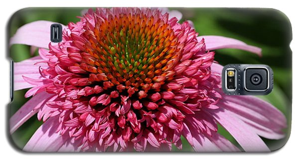 Pink Coneflower Close-up Galaxy S5 Case