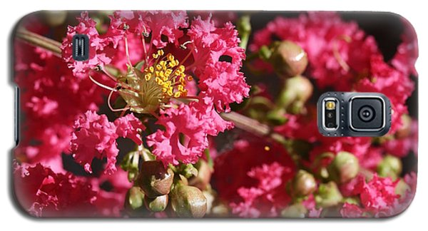 Pink Crepe Myrtle Flowers Galaxy S5 Case