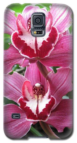 Pink Cymbidium Orchids Galaxy S5 Case