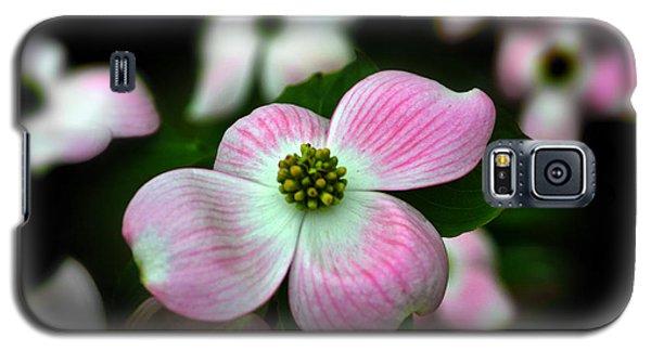 Pink Dogwood 003 Galaxy S5 Case