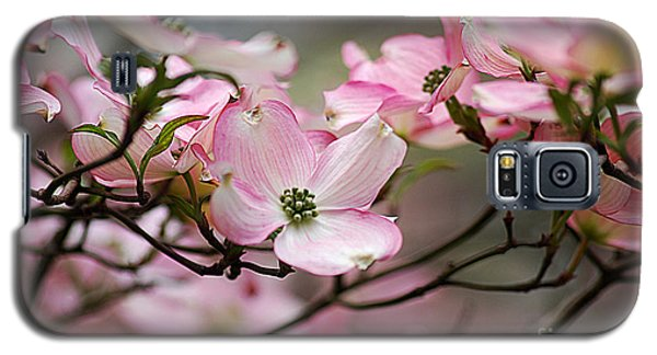 Pink Dogwood 20120415_68a Galaxy S5 Case