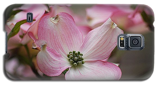 Galaxy S5 Case featuring the photograph Pink Dogwood 20120415_70a by Tina Hopkins