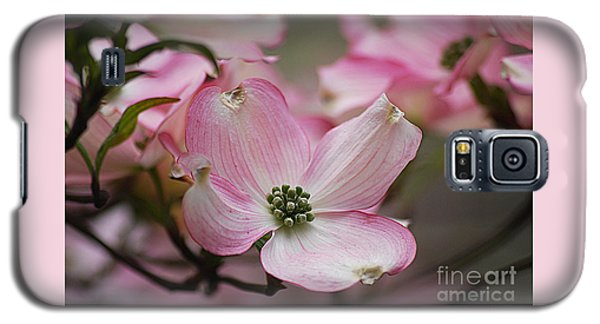 Pink Dogwood 20120415_70a Galaxy S5 Case