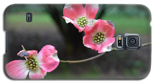Galaxy S5 Case featuring the photograph Pink Dogwood by Linda Geiger