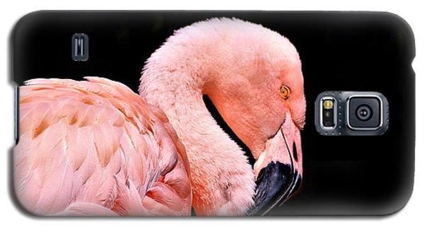 Pink Flamingo On Black Galaxy S5 Case