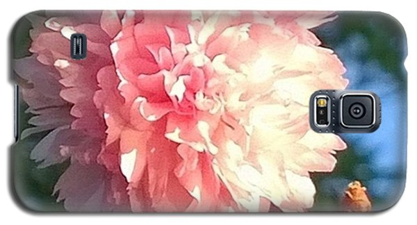 Pink Flower Bloom In Sunset. #flowers Galaxy S5 Case