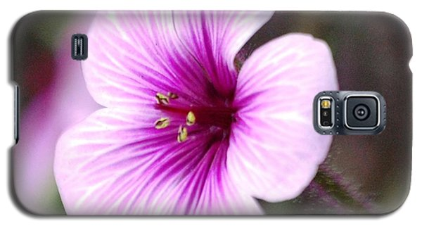 Galaxy S5 Case featuring the photograph Pink Flower by Sumoflam Photography
