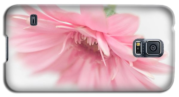 Pink Gerbera Daisy II Galaxy S5 Case by David and Carol Kelly