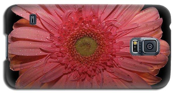 Pink Gerbera Daisy  Galaxy S5 Case