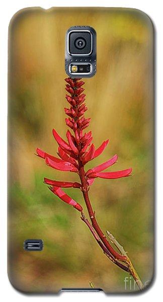 Galaxy S5 Case featuring the photograph Pink Glory by Deborah Benoit