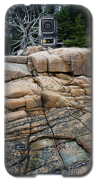 Pink Granite And Driftwood At Schoodic Peninsula In Maine  -4672 Galaxy S5 Case