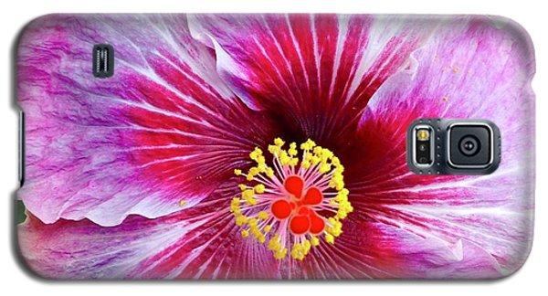 Pink Hibiscus Joyous Cosmology Galaxy S5 Case