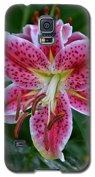 Pink Lily Galaxy S5 Case by Bonnie Myszka