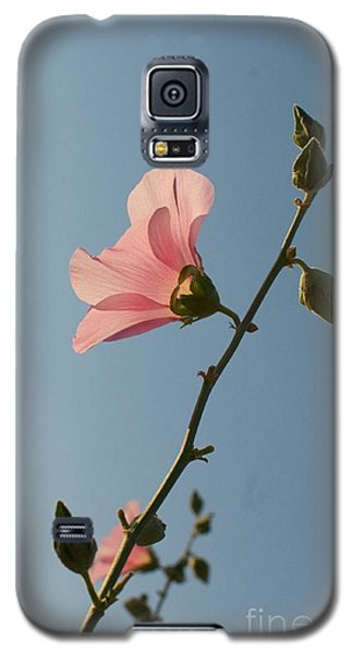 Galaxy S5 Case featuring the photograph Pink by Louise Fahy
