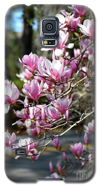 Saucer Magnolia Galaxy S5 Case - Pink Magnolias By The Road by Carol Groenen