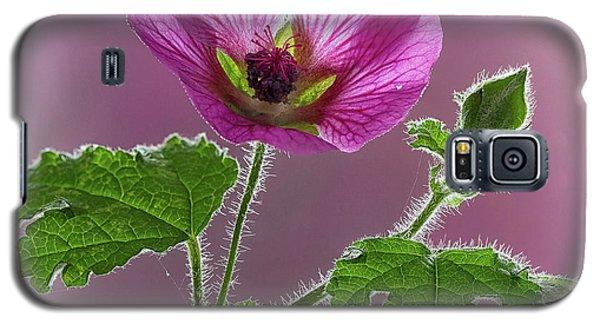 Pink Mallow Flower Galaxy S5 Case
