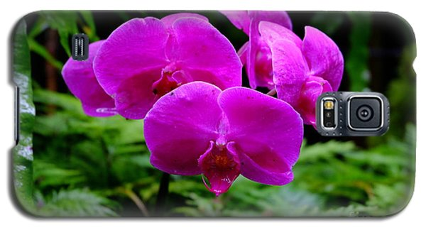 Pink Orchids Galaxy S5 Case by Mini Arora