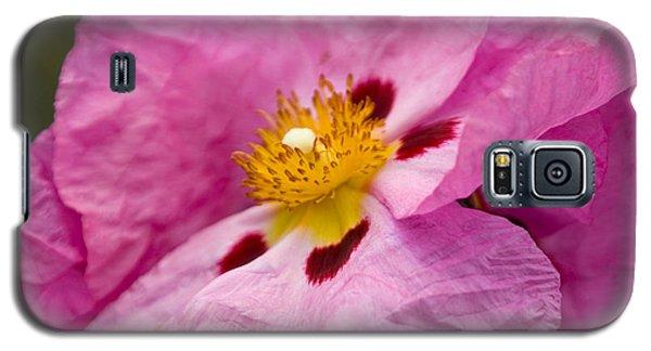 Pink Parchment Flower Galaxy S5 Case