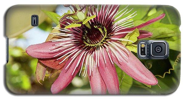 Pink Passiflora Galaxy S5 Case by Elvira Ladocki