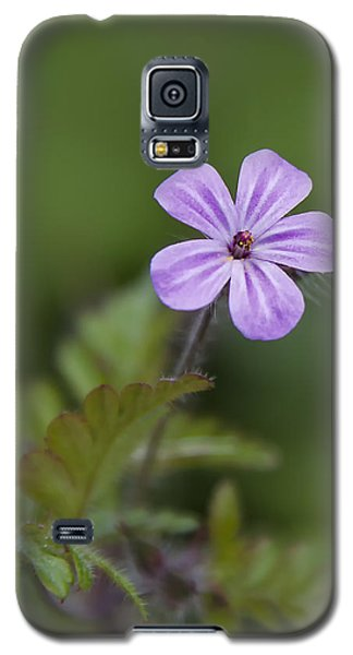 Pink Phlox Wildflower Galaxy S5 Case