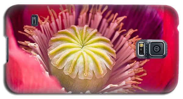 Pink Poppy Flower Galaxy S5 Case