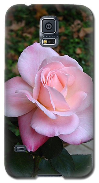 Galaxy S5 Case featuring the photograph Pink Rose by Carla Parris