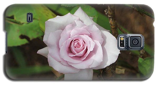 Galaxy S5 Case featuring the photograph Pink Rose by Jerry Battle
