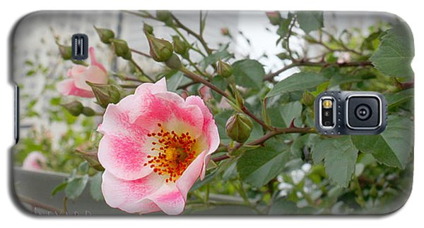 Pink Rose Of Tulsa Galaxy S5 Case
