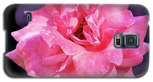 Pink Rose With Violet Galaxy S5 Case