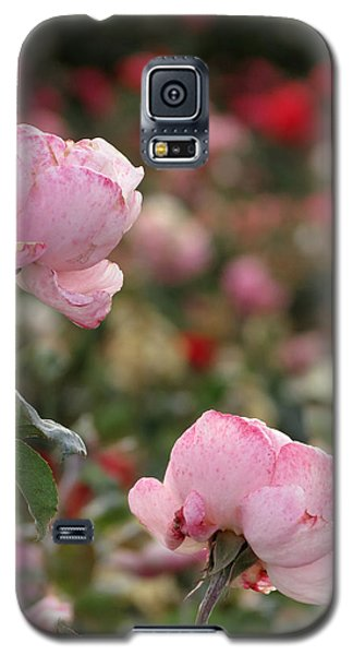 Galaxy S5 Case featuring the photograph Pink Roses by Laurel Powell