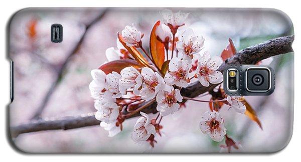 Galaxy S5 Case featuring the photograph Pink Sakura Cherry Blossom by Alexander Senin
